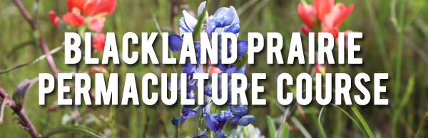 blackland prairie banner copy