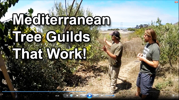 Mediterranean Tree Guilds That Work