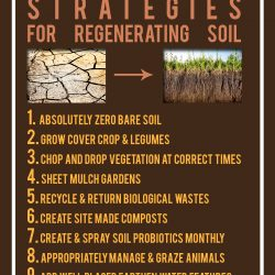 10-soil-strategies-copy