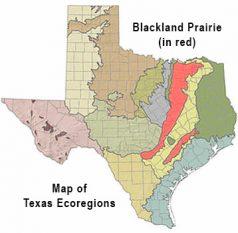blackland-prairies-tx1