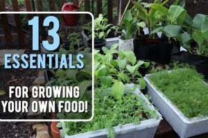 so-you-want-to-grow-food-copy1