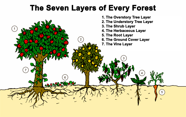 Permaculture Tip Of The Day 7 Layers A Forest