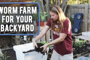 worm farm for your backyard copy