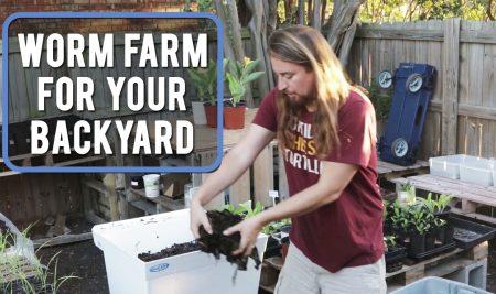 Worm Farm For Your Backyard!
