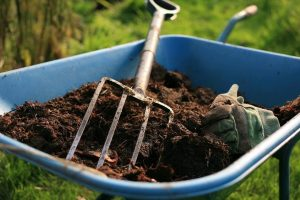 compost in wheelbarrow