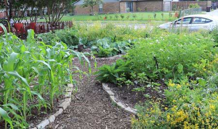 Tour suburban permaculture site two months into spring…