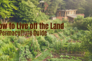 Live off land – AP